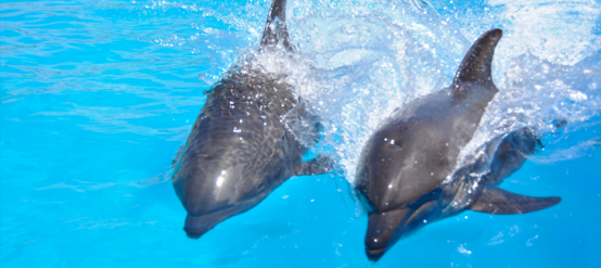 Dolphins and their behavior