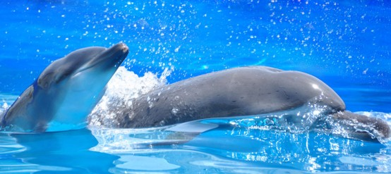 How much do you know about the most fun marine mammal, the dolphin?