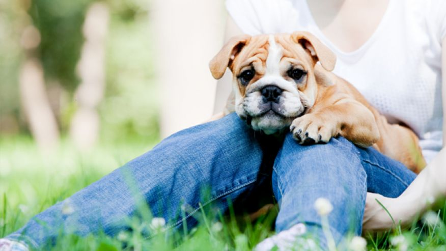 dogs make the best pet Whether you are choosing a therapy dog or a service dog, it is most important to make sure their in the best therapy and service dogs are a all pet news 2013.