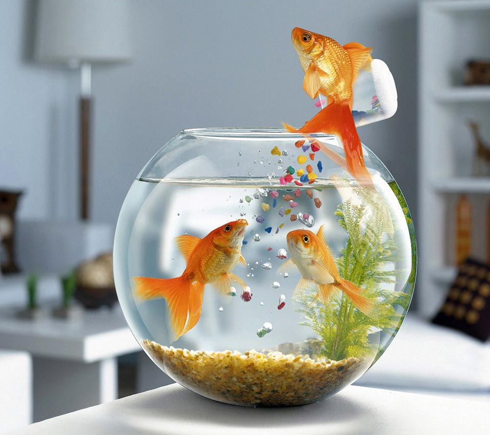 Fish care care your pet dog or cat online plupetstore com for How do you clean a fish tank