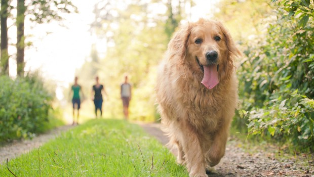 What To Expect From Your Dog As He Reaches His Adult Years