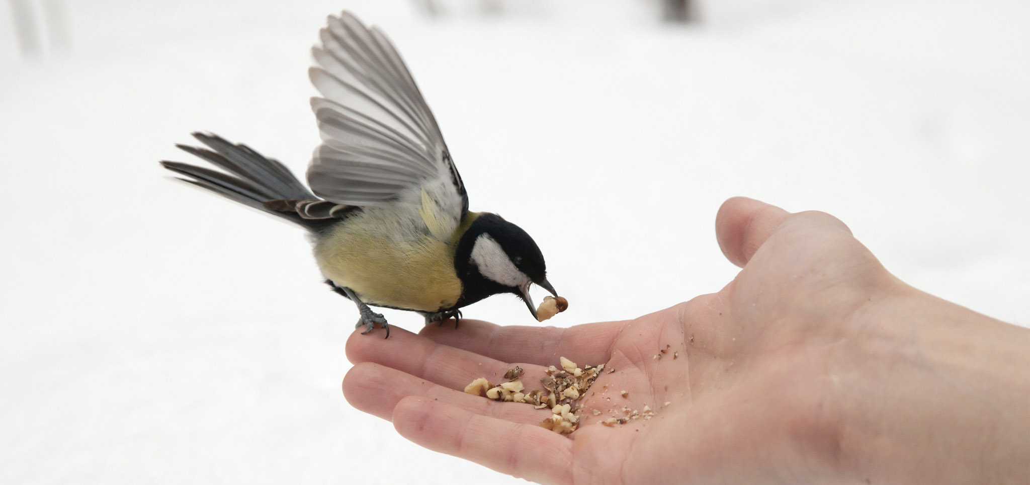 5 Tips For How To Feed A Bird