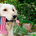 5 Top Tips for Pet Safety On July 4