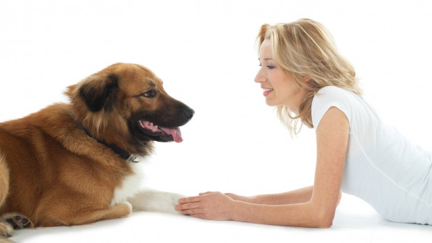 Dog Training On How To Teach Your Dog To Cross His Paws