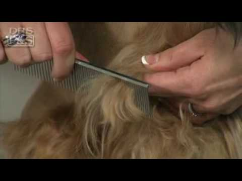 Dealing With Matted Dog Hair