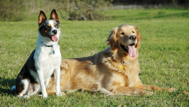 Dogs Tips For Teaching Your Dog To Retrieve