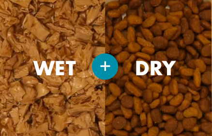 What is best for cats wet or dry food ?