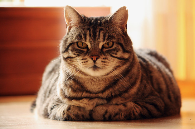 5 Big Secrets To Turn Your Cat Improper Care