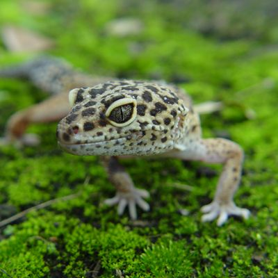 Tips For Reptile Diseazes