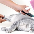 Several Tips For Cat Grooming