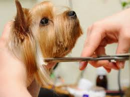 Several Great Ways For Dog Grooming