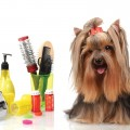 Tips For Dog Grooming Basics