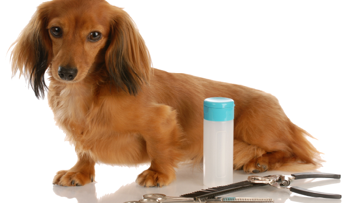 You Need to Know About Dog Grooming
