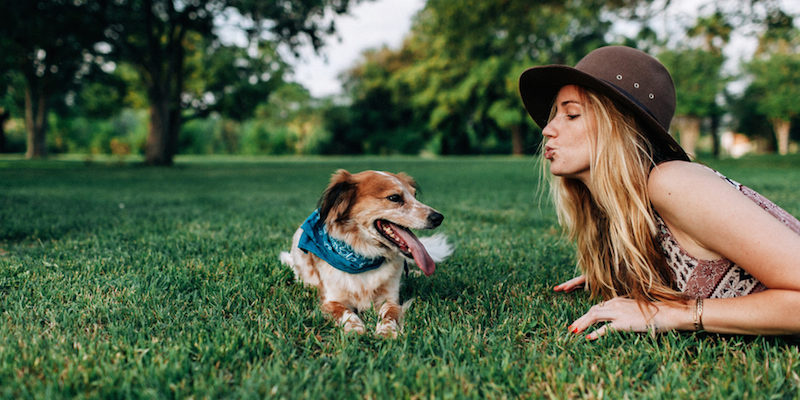 Top 6 Signs of a Healthy Dog