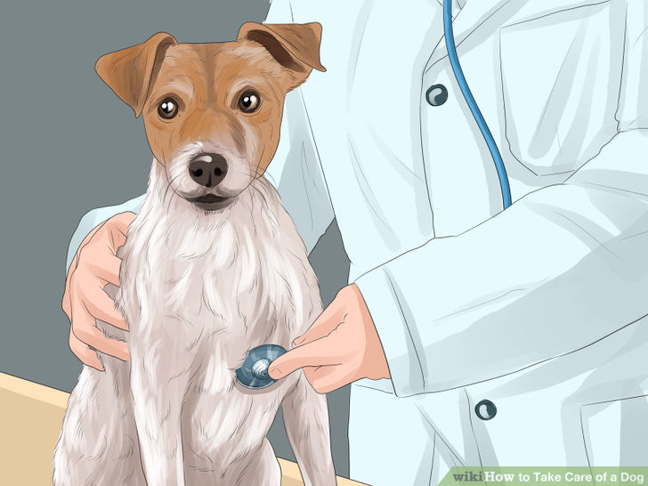 How to take care of pets?