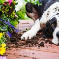 Pet-Proof Your Garden