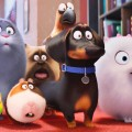 """After Watching """"The Secret Life of Pets"""""""