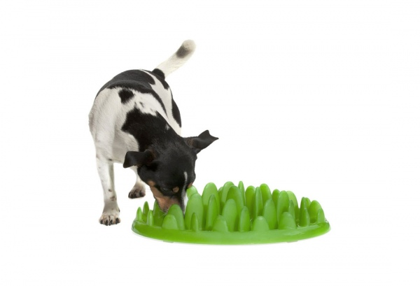 green slow feeder terrier
