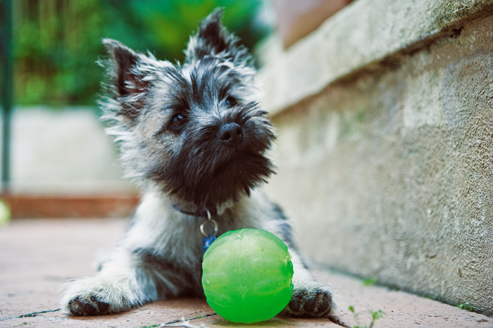 Puppy exercise and play