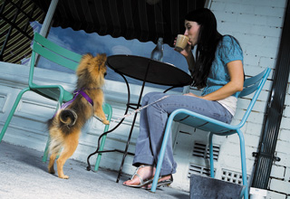 Teaching puppies good manners