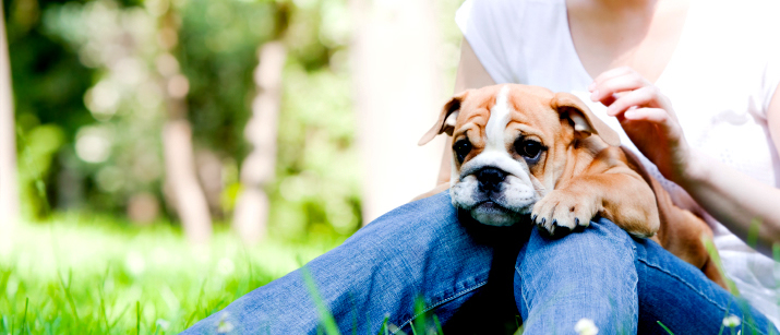 English bulldog pup and owner