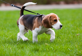 Worming your puppy