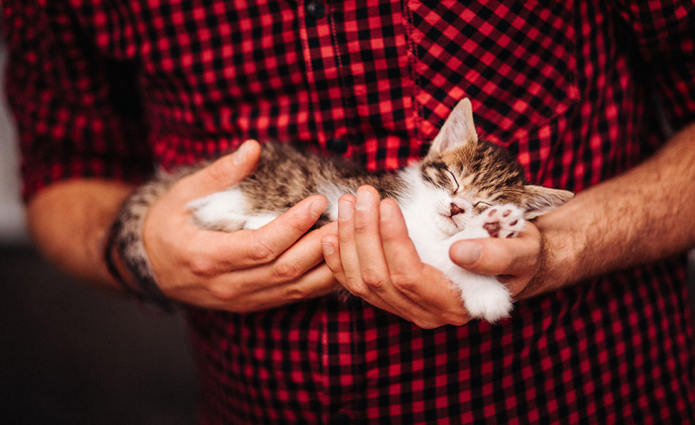 Ten traits that make cats irresistible