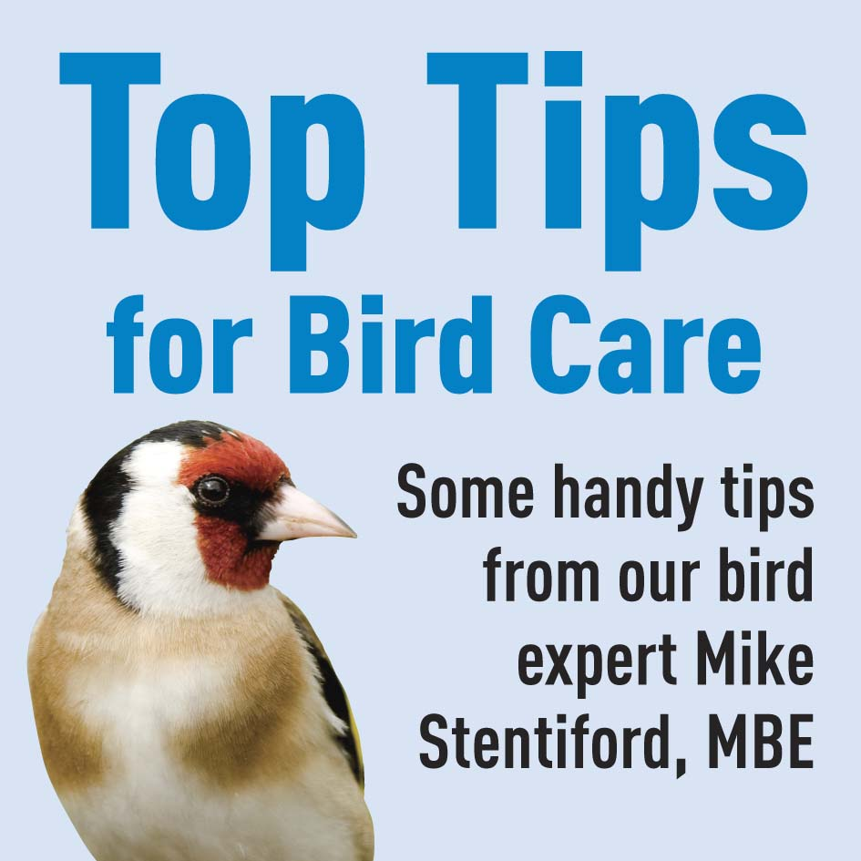 General Bird Care Tips