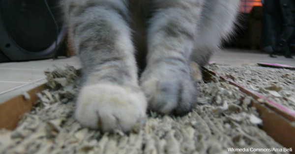 New York State Bill to Ban Declawing is Delayed Until 2017